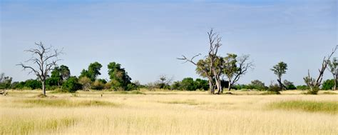 Moremi Game Reserve | My Guide Botswana