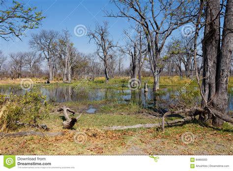 Moremi Game Reserve, Okavango Delta, Botswana Africa Stock ...