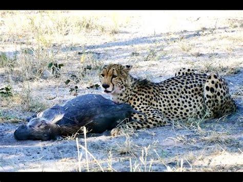 Moremi Game Reserve, Okavango Delta, Botswana HD   YouTube