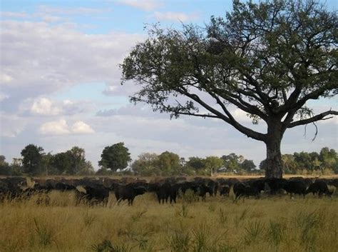 Moremi Game Reserve Photos   Featured Images of Moremi ...