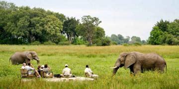 Moremi Game Reserve | Sun Safaris