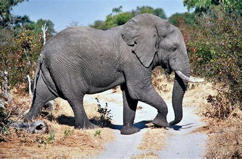Moremi Game Reserve   Wikipedia