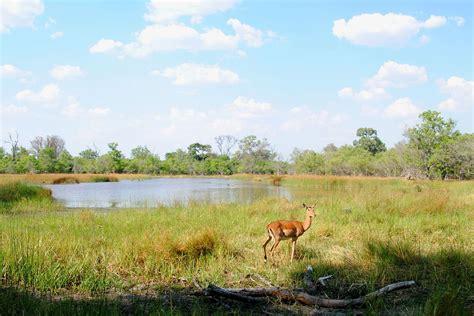 Moremi Wildreservat – Wikipedia