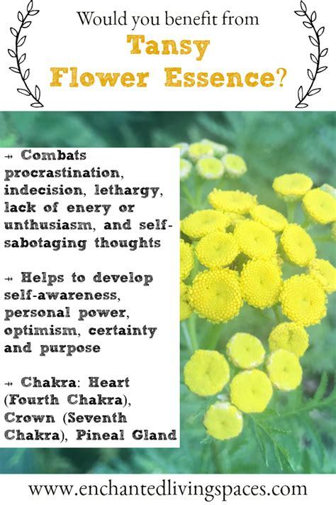 Morning Glory Flower Essence Benefits   MORNING WALLS