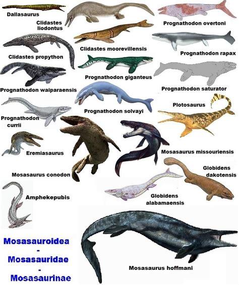 Mosasaurios | Prehistoric animals, Extinct animals, Prehistory