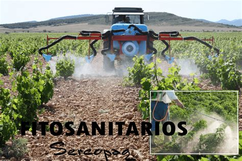 Mosca del olivo: Se ha superado el 5% de aceituna picada ...