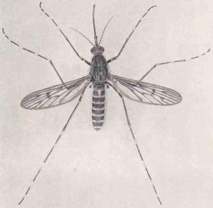 Mosquito control   Wikipedia