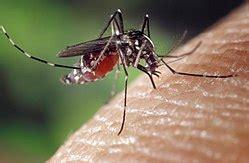 Mosquito   Wikipedia, la enciclopedia libre
