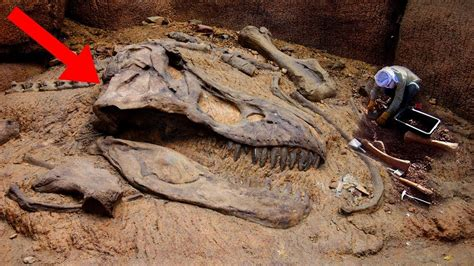 Most AMAZING Fossil Discoveries Ever!   YouTube