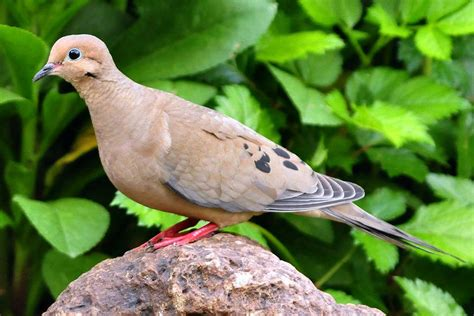 Most Common Backyard Birds