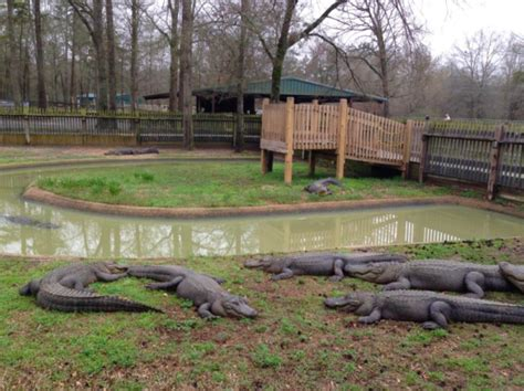 Most People Don't Know This Louisiana Zoo And Adventure ...