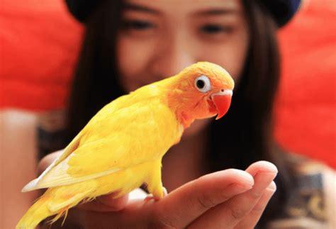 Most Popular Pet Birds | PetMD