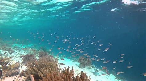 Muchos peces en el mar   YouTube