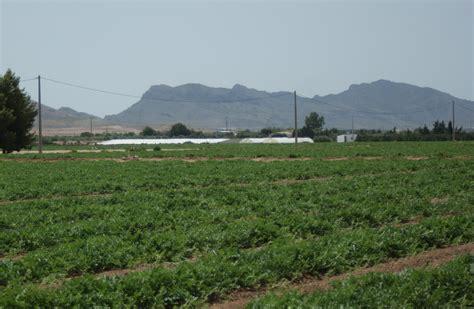 Murcia acoge hoy a los principales productores ...