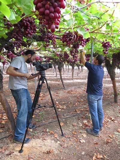 Murcia, elegida por el Magrama para grabar un vídeo sobre ...