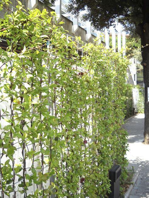 Muro vegetal de plantas naturales   CONFINA   poliflor ...