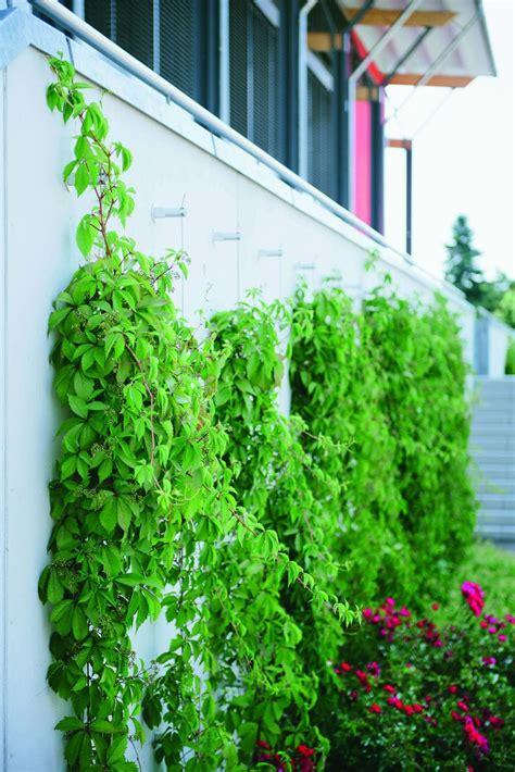 Muro vegetal estabilizado / a medida / de interior / de ...