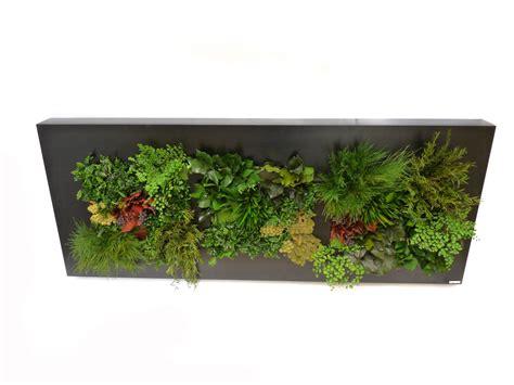Muro vegetal/Vegetal wall XI | Muro vegetal, Muros verdes ...