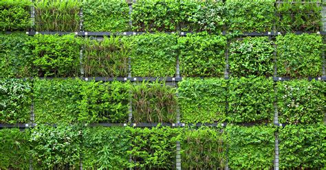Muros verdes artificiales vs naturales – Ranka