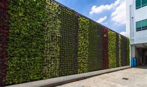 Muros Verdes | Descubre Fundación UNAM