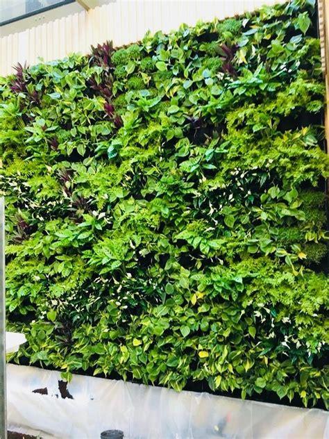 Muros Verdes Jardín Vertical Natural Follaje Geotextil ...