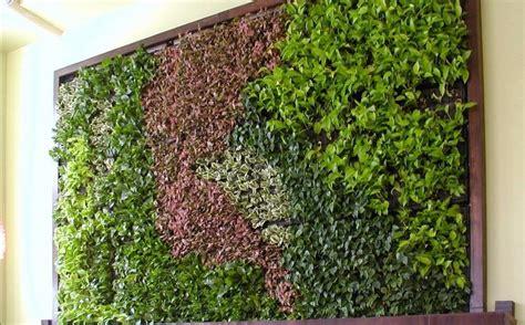 Muros Verdes Naturales   $ 980.00 en Mercado Libre