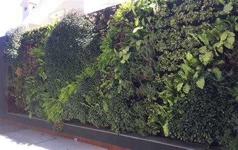 Muros verdes naturales: paredes tapizadas de plantas ...