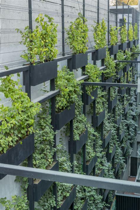 Muros Verdes   Plantas y Jardines El Sembrador