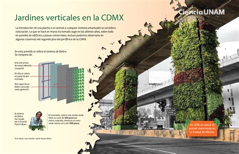 Muros verdes, práctica en aumento   Ciencia UNAM