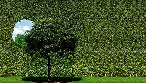 Muros Verdes, Qué Son, Origen, Características ...