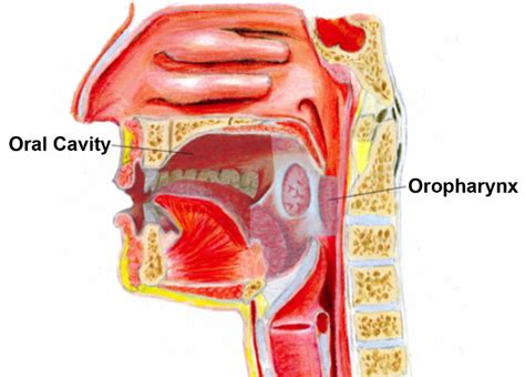 MUSC ENT E Update: Oral Cavity and Oropharyngeal Cancer, A ...