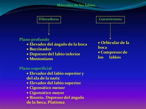 Músculos de la Cara. Morfo III. Ing Biomédica