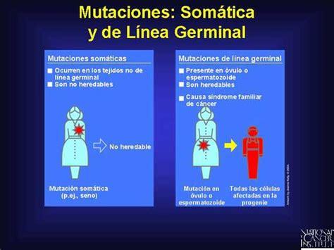 Mutaciones: Mutación de linea germinal
