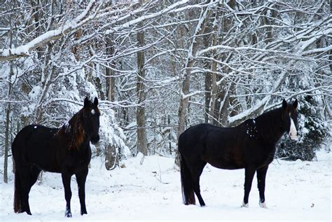 My Corner of the World: Snow and Horses