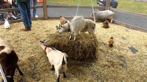 My Daughter Loved The Petting Zoo We Visited And It Was ...