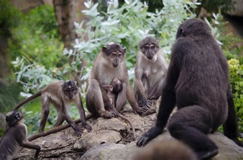 """Nace un nuevo """"mono de la raya en el ojo"""" en Bioparc ..."""