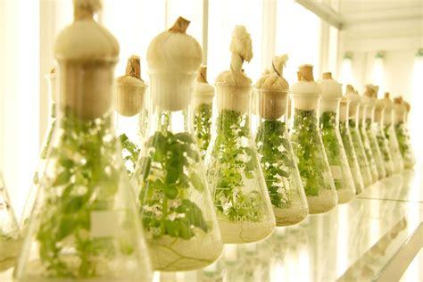 Nanobiotecnología – Agriculturers.com | Red de ...