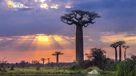 National Geographic Documentary | Madagascar A World Apart ...