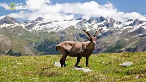 National Geographic   Italian Wildlife   New Documentary ...