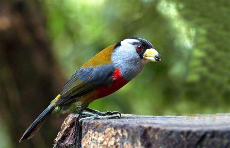 NATURALEZA ALADA . Paco Salso: Aves de Ecuador