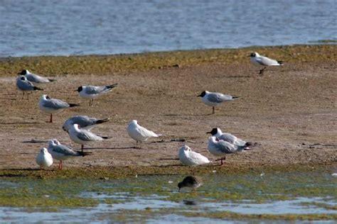 Naturaleza del Mar Menor Flora y fauna   Región de Murcia ...