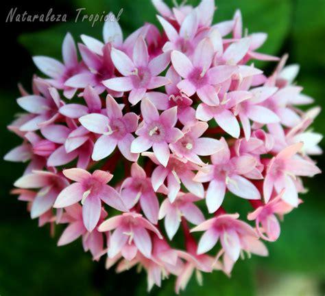 Naturaleza Tropical: 8 plantas que florecen todo el año en ...