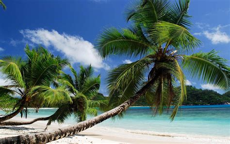 nature, Beach, Tropical Wallpapers HD / Desktop and Mobile ...