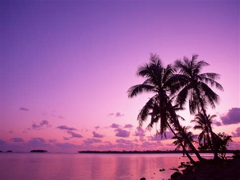 nature, Palm Trees, Sea Wallpapers HD / Desktop and Mobile ...