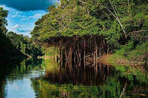 Natuurreis Brazilië   van Rio naar Matto Grosso   21 dagen