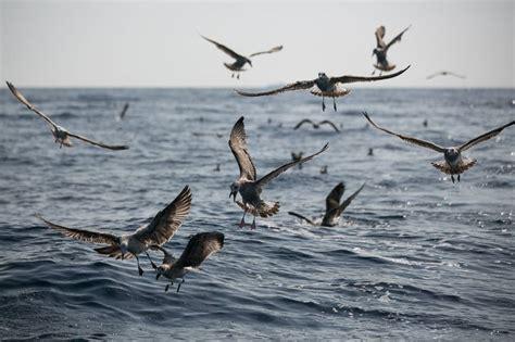 Navegando en donde mueren las aves marinas | Cataluña | EL ...