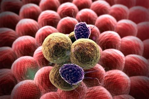 Neoplasia maligna: o que é, diagnóstico e tratamento   Tua ...