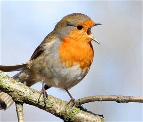 Nerina Thomas: Me secuestró el sonido de los pájaros