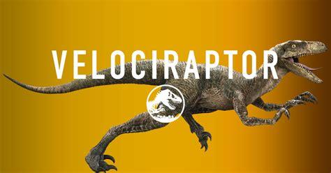 NeuroDojo: Leader of the pack: fleshing out Velociraptor ...
