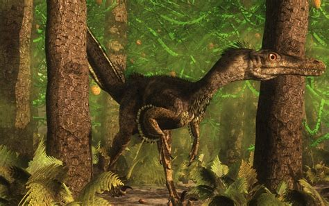 New Fossil Reveals Velociraptor Sported Feathers ...
